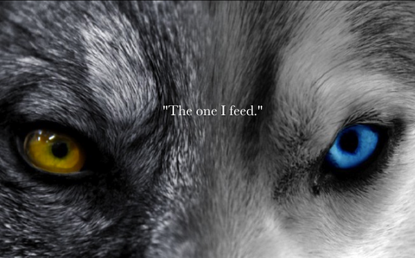 two wolves 2